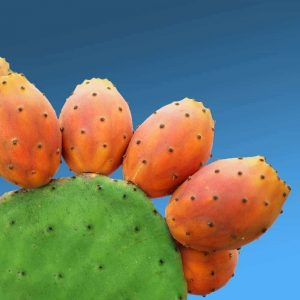 Prickly Pear Seeds and Olive Oil Soap - @ilovecrete.eu -